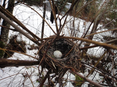 I'm pretty sure that it is a dark-eyed junco nest and egg.