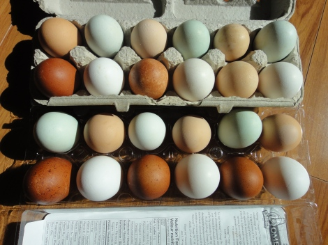 This batch even has the blues and greens of an Araucana hen