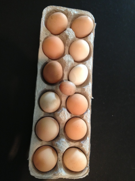 Here is the first week's bounty minus the two that we ate and the two that were pecked or broken. 17 eggs in one week?  We better open a market stand!