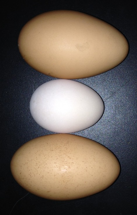 Teeny eggs like this give new meaning to a 3 egg omelette!