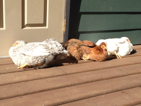 A communal Chicken Melt on the sunny porch.