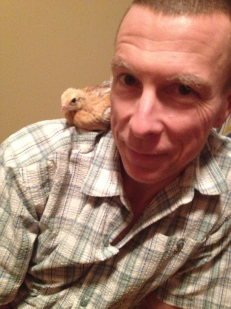 When we brought home seven 4 week-old chicks, OverEasy was the most comfortable with us, climbing up to FM's shoulder