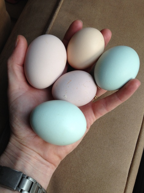Here is a sample of a typical daily haul. Each egg can be easily linked back to its hen.  Over-Easy's is the top-most egg.