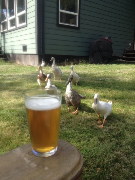I interrupt this tragic story with a picture that warms my heart - ducks and homebrewed beer on a sunny afternoon.